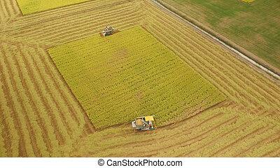 vista aérea, de, combinar, ligado, colheita, campo, em, ayutthaya, tailandia
