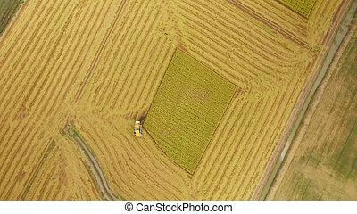 vista aérea, de, combinar, ligado, colheita, campo