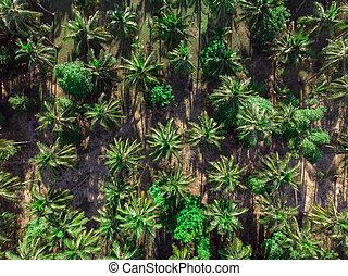 vista aérea, de, coqueiros, plantação