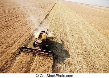 vista aérea, de, cosecha, en, campo