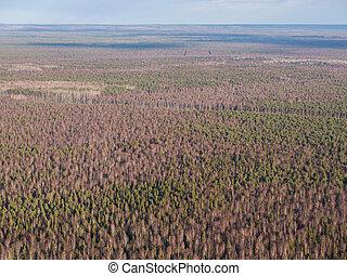 vista aérea, de, floresta