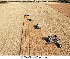 vista aérea, de, harvesters, em, formação