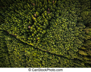 vista aérea, de, vasto, florestas