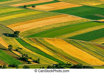 vista aérea, de, verde, campos