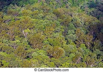 vista aérea, ligado, australiano, floresta