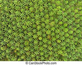 vista aérea, ligado, plantação, de, coqueiros