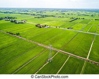 vista aérea, -, verde, paddy, campos