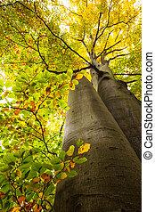 vista, bajo, grande, árboles, ángulo