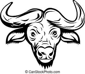 vista, capo, o, nero, bianco, bufalo, africano, fronte, ...