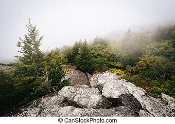 vista, de, árvores, em, nevoeiro, de, pretas, rocha, em,...
