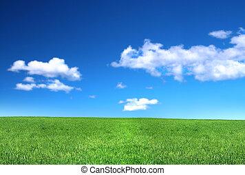 vista, de, calmo, gramado