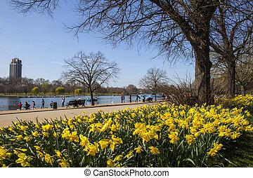 vista, de, parque hyde, em, primavera