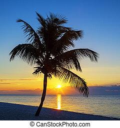 vista, de, praia, com, árvore palma, em, pôr do sol