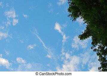 vista, en, árbol, y, nubes, en, cielo azul