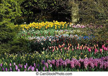 vista, en, flores del resorte, en, jardín