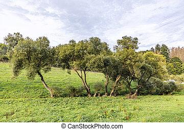 vista, escénico, paisaje, wisper, hesse, viejo, tradicional, agricultura, valle, bosques