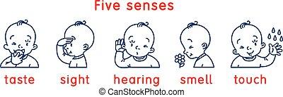 vista, gosto, toque, sentidos, cheiro, ouvindo, icon., cinco