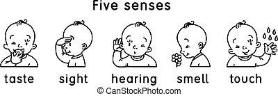 vista, icon., sapore, udienza, sensi, cinque, tocco, odore