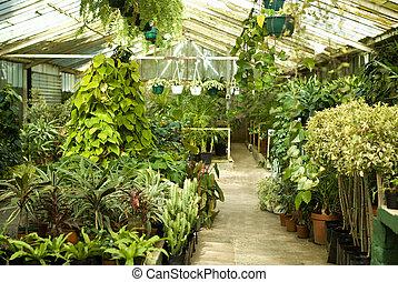 vista, invernadero, plantas