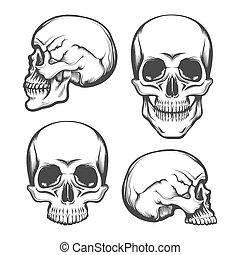 vista, lado, jogo, frente, crânio humano