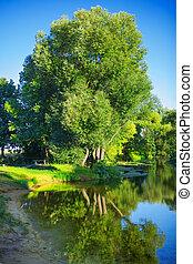 vista, ligado, árvore grande, ligado, costa, de, pequeno, rio