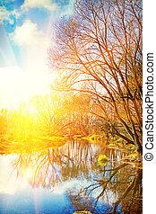 vista, ligado, amanhecer, ligado, pequeno, rio, em, leafless, floresta, instagram, stil