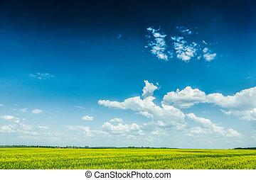 vista, ligado, céu nublado, e, campo amarelo, dia ensolarado