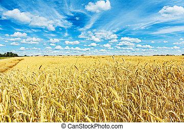 vista, ligado, campo, de, trigo, e, beleza, nublado, céu azul