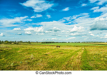 vista, ligado, campo, e, céu, rural, vista