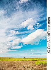 vista, ligado, campo milho, e, céu