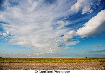 vista, ligado, campo milho