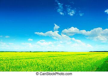 vista, ligado, campo verde, em, verão