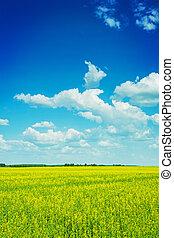 vista, ligado, florescer, rapeseed, campo, e, céu