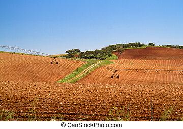 vista, ligado, marrom, campo agricultura, azul, céu