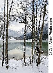 vista, ligado, um, lago, trough, árvores.