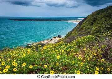 vista, océano pacífico, flores amarillas, po, inspiración