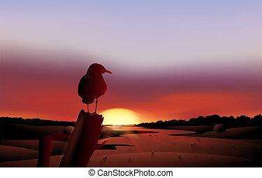vista, ocaso, desierto, pájaro