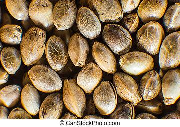 vista., orgânica, macro, topo, macro., detalhe, seed., marijuana, cannabis, sementes, fundo, muitos, cânhamo, seeds.