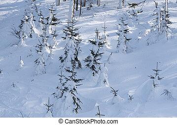 vista, -, pássaro, árvores, profundo, olho, nevado