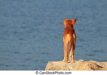 vista posteriore, cane, fuori, dall'aspetto, solo, mare, ...