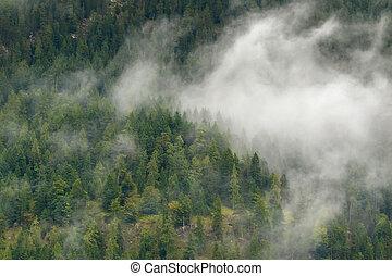 vista scenica, di, verde, foresta pino, alto, montagna, in, nubi basse, durante, autunno, in, europa