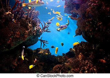 vista submarina, pez, barrera coralina