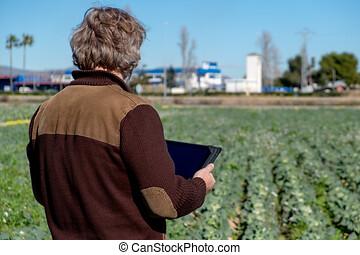 vista trasera, de, un, granjero, con, un, tableta, mirar, el...