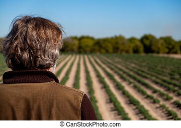 vista trasera, de, un, granjero, observar, el suyo, cosechas