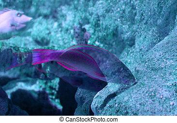Visual fish effect - Creative design of Visual fish effect