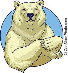vit, björn