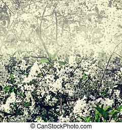 vit, blomstrande, träd, Blomstrar, filial