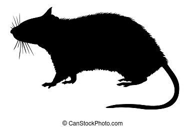 vit fond, silhuett, råtta