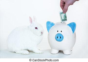 vit, kanin, sittande, bredvid, blåttar och white, piggy packa ihop, med, hand, sätta, pengar, in, vita, bakgrund