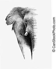 vit, svart, artistisk, elefant